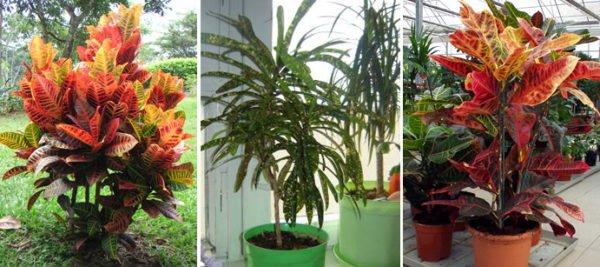 правильный уход за растением