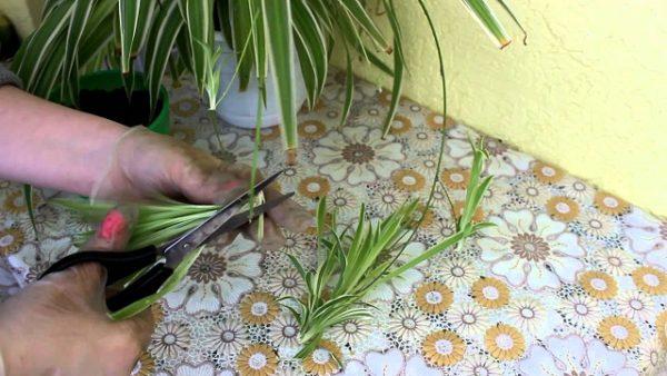 обрезка листьем
