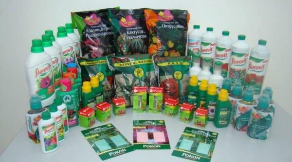 Пеперомия в домашних условиях: полив, размножение, уход, болезни