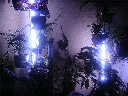 освещение для цветочков