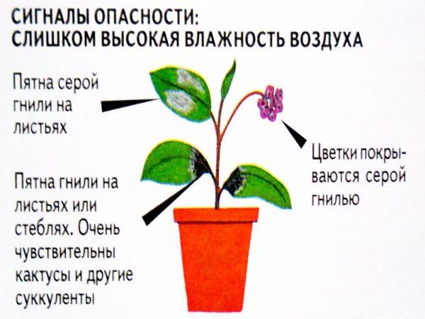 влажность для цветка