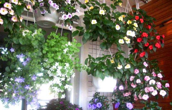 Цветы на стене