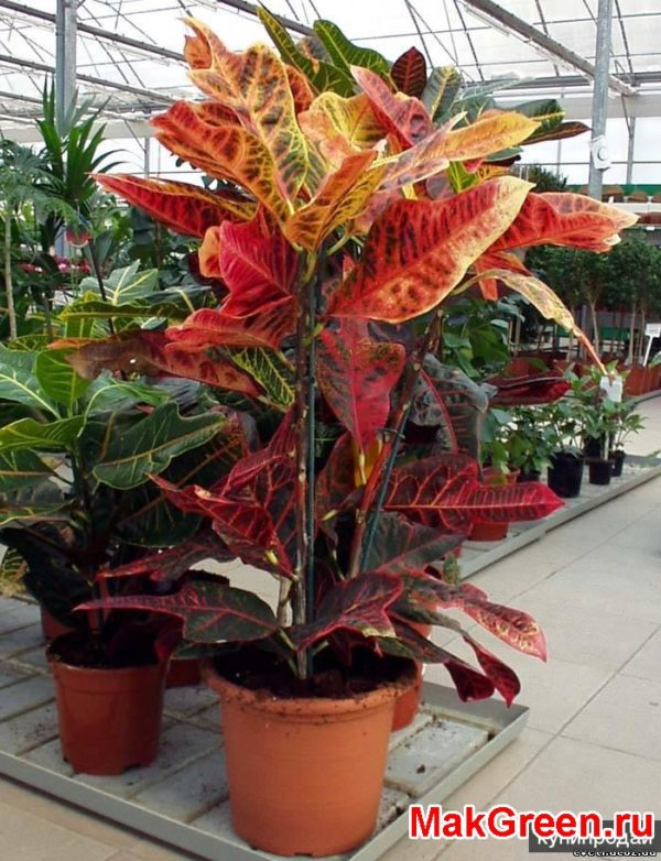 растение в весь рост