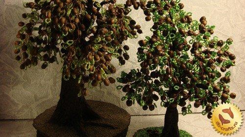 красивые дерева с зернами кофе