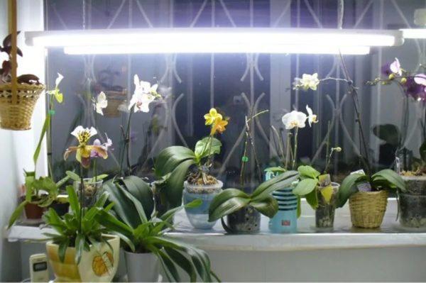 освещение для камбрии