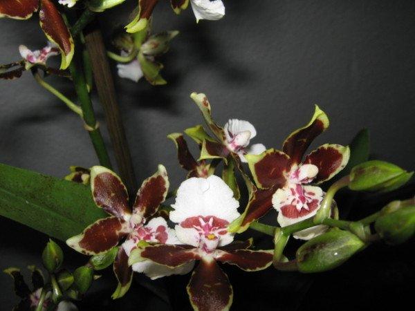 вредители растений домашних