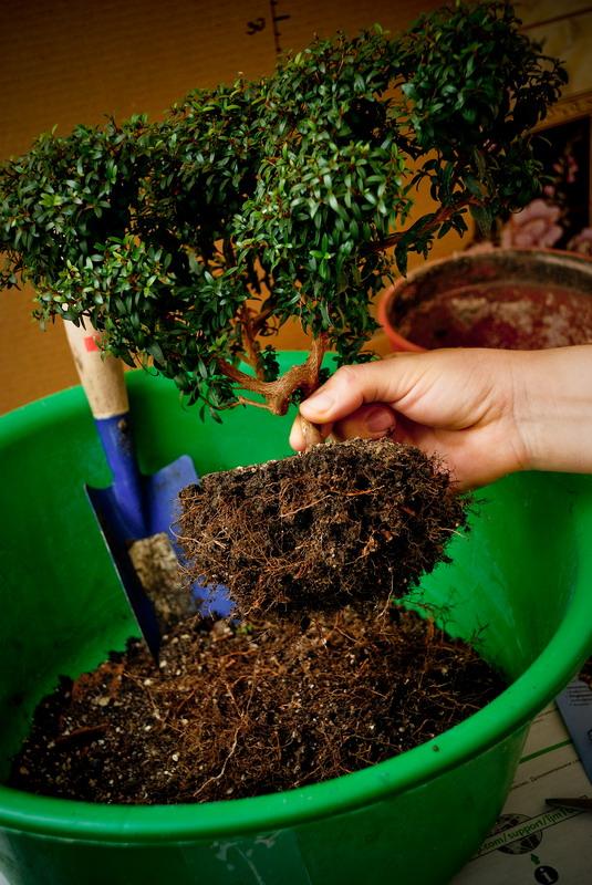 Уход за комнатным растениями в домашних условиях 376