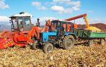 Как производится уборка кукурузы на зерно или силос