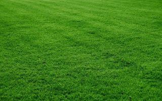 Стрижка газона: когда и как косить траву для лучшего эффекта