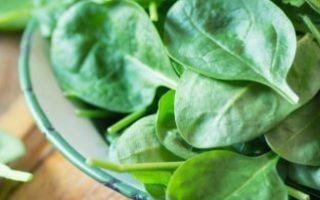 Виды шпината – выбираем сорт осознанно