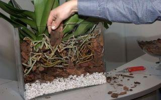 Подбираем грунт для орхидей сами