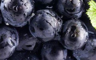 Чёрная смородина ядрёная: описание и характеристика сорта, достоинства и недостатки, особенности посадки и ухода