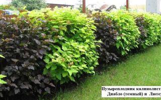 Какие кустарники и растения выбрать для живой изгороди