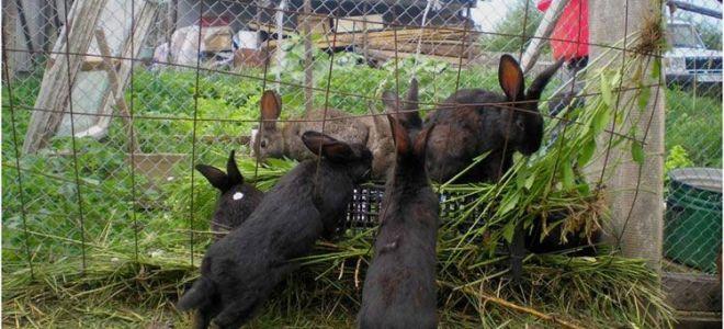 Содержание кроликов в домашних условиях, ямах, вольерах, практика разведения
