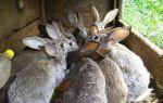 Разведение кроликов в домашних условиях — все способы кролиководства
