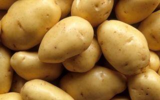 Сортовое разнообразие картофеля, описание, вкусовые характеристики и классификация сортов