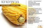 Полезные свойства и польза кукурузы