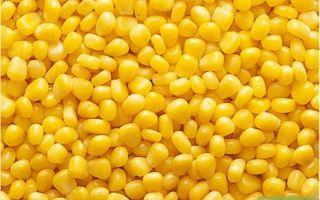 Технология выращивания кукурузы на зерно: посев, уход, сбор урожая