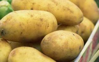 Всё о картофеле Невский — описание, секреты посадки и ухода, другие аспекты