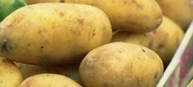 Всё о картофеле Невский