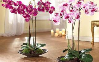 Правила ухода за орхидеями: размножение, полив, пересадка