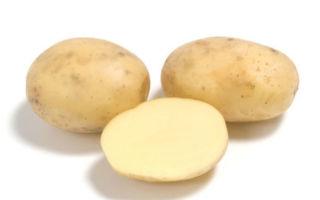 Картофель коломбо — описание сорта с фото и отзывами