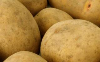 Картофель скарб — описание сорта с фото, характеристика, особенности выращивания, отзывы