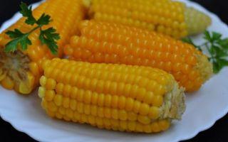 Наиболее популярные сорта кукурузы: бондюэль, спирит, добрыня и др.