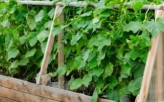 Парник для огурцов своими руками: виды, фото и схемы, как сделать и чем можно укрыть