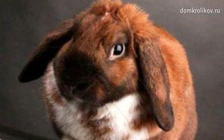 Разведение кроликов в домашних условиях и в промышленных масштабах