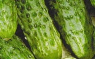Как собрать семена огурцов и получить рассаду