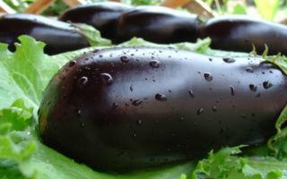 Баклажаны — полезные свойства и возможный вред