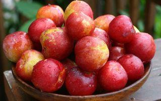 Слива красный шар — подробная характеристика сорта, правила выращивания и ухода