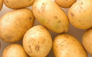 Картофель ривьера, описание сорта с фото и отзывами