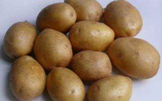Картофель джелли: описание сорта с фото и отзывами