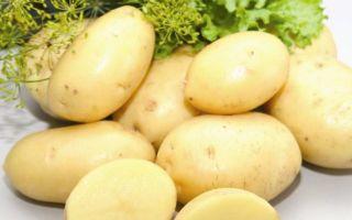 Картофель импала: описание сорта и характеристика с фото