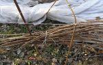 Подготовка малины к зиме — основные правила, осенние мероприятия