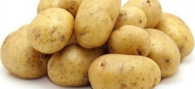 Картофель фермер: описание сорта, правила ухода, отзывы