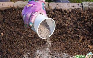 Удобрения для тюльпанов — правила и последовательность подкормки тюльпанов