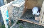 Делаем кормушки для кроликов своими руками