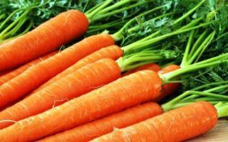 Чем полезна морковь и какие уникальные свойства ей присущи?