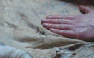 Выделка шкур кролика или как получить качественное сырьё