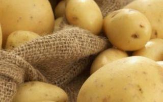 Всё о картофеле американка — описание сорта, посадка, уход и другие аспекты + фото