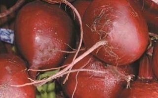 Время уборки свеклы и урожайность свеклы с 1 га