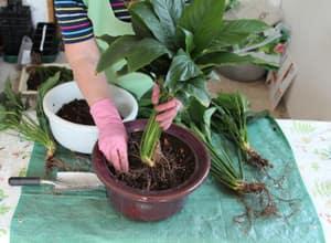 как посадить растение