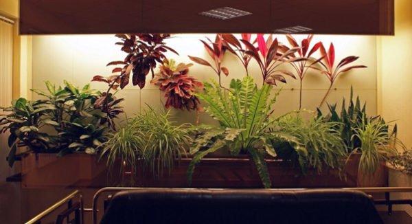 освещение домашних растений