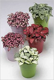 Невзрачные цветки