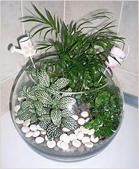 в вазе