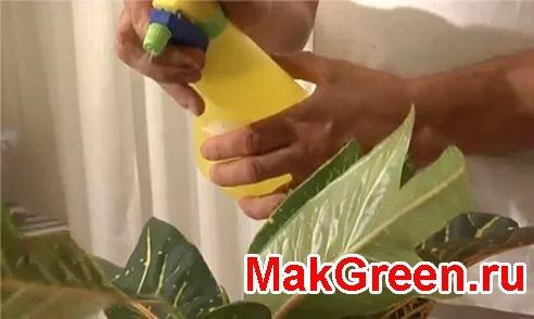 опрыскивание листьев