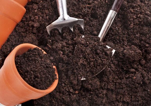 Подготовка почвы в горшке